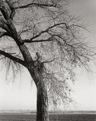 Galerie Bassenge Berlin - Robert Adams, Broken Cottonwood, east of Longmont, Colorado, 1984