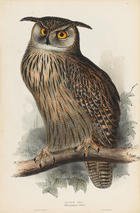 John Gould, The Brids of Europe, London 1832-1837