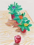 David Hockney, Purple, Pink and Yellow African Violets with Apple on Table. New York, 2000