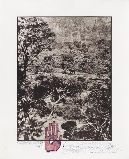 Peter Beard, Elephant Tussle in the Aberdare Forest, 1972