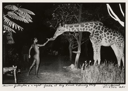 Peter Beard, Maureen Gallagher and a Late Night Feeder at Hog Ranch, 1987
