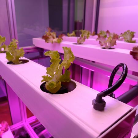 "Die ""Indoor Farm"" des Fraunhofer-Instituts"